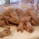 150 hybrides d'animaux humains cultivés dans des laboratoires britanniques: Des embryons ont été produits secrètement